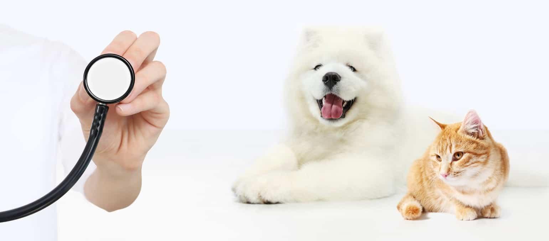 mascotas-gato-y-perro-en-veterinario